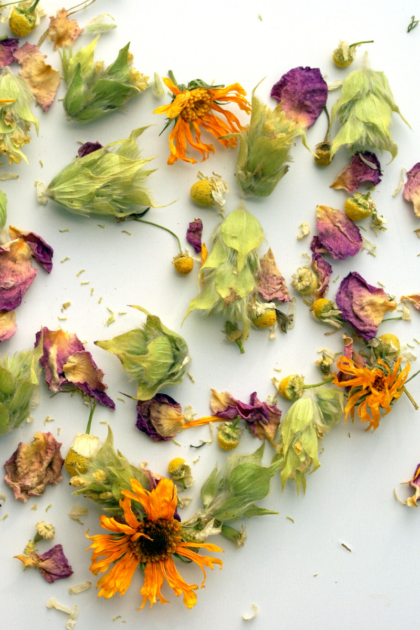 Αποξηραμένα βότανα, καλέντουλα, τσάι του βουνού, χαμομήλι και ροδοπέταλα απλωμένα πάνω σε άσπρη επιφάνεια